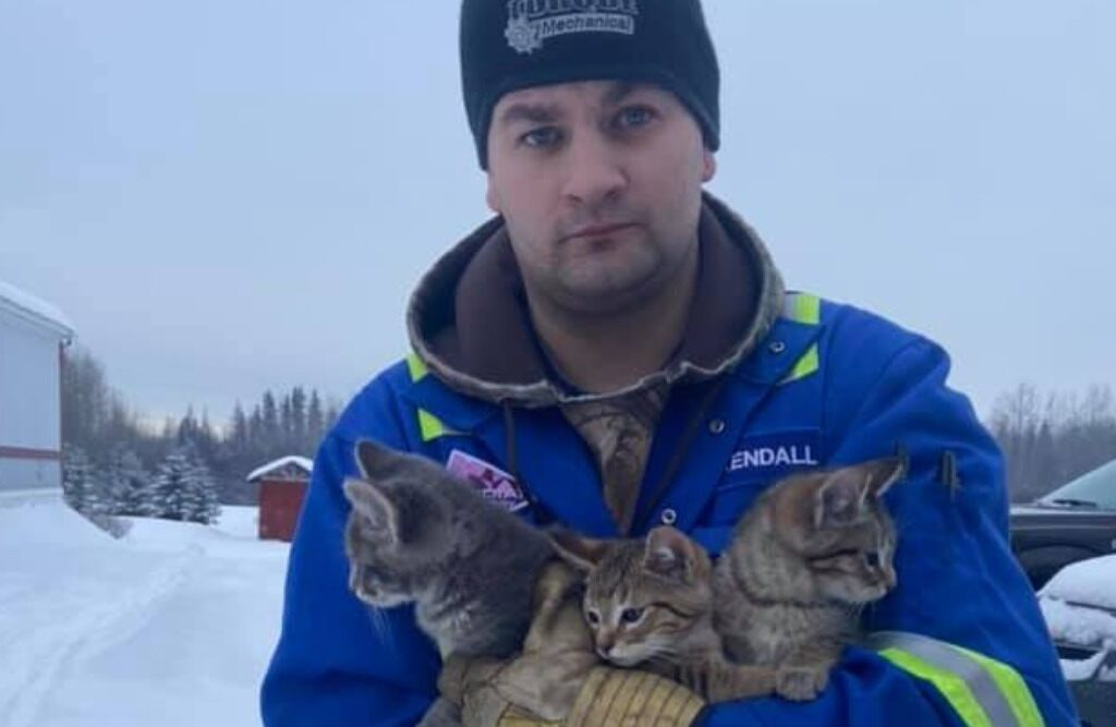 Man Uses Hot Coffee to Rescue Three Kittens From a Frost Trap