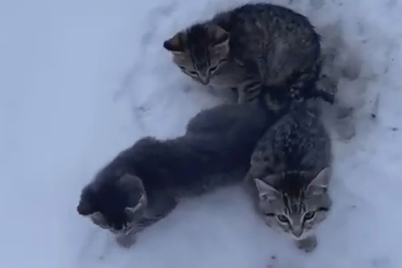 Three kittens in the snow