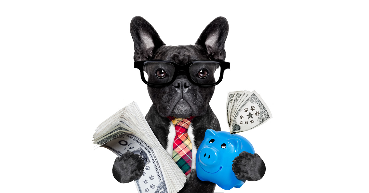 Black Frenchie holding a piggy bank and some cash