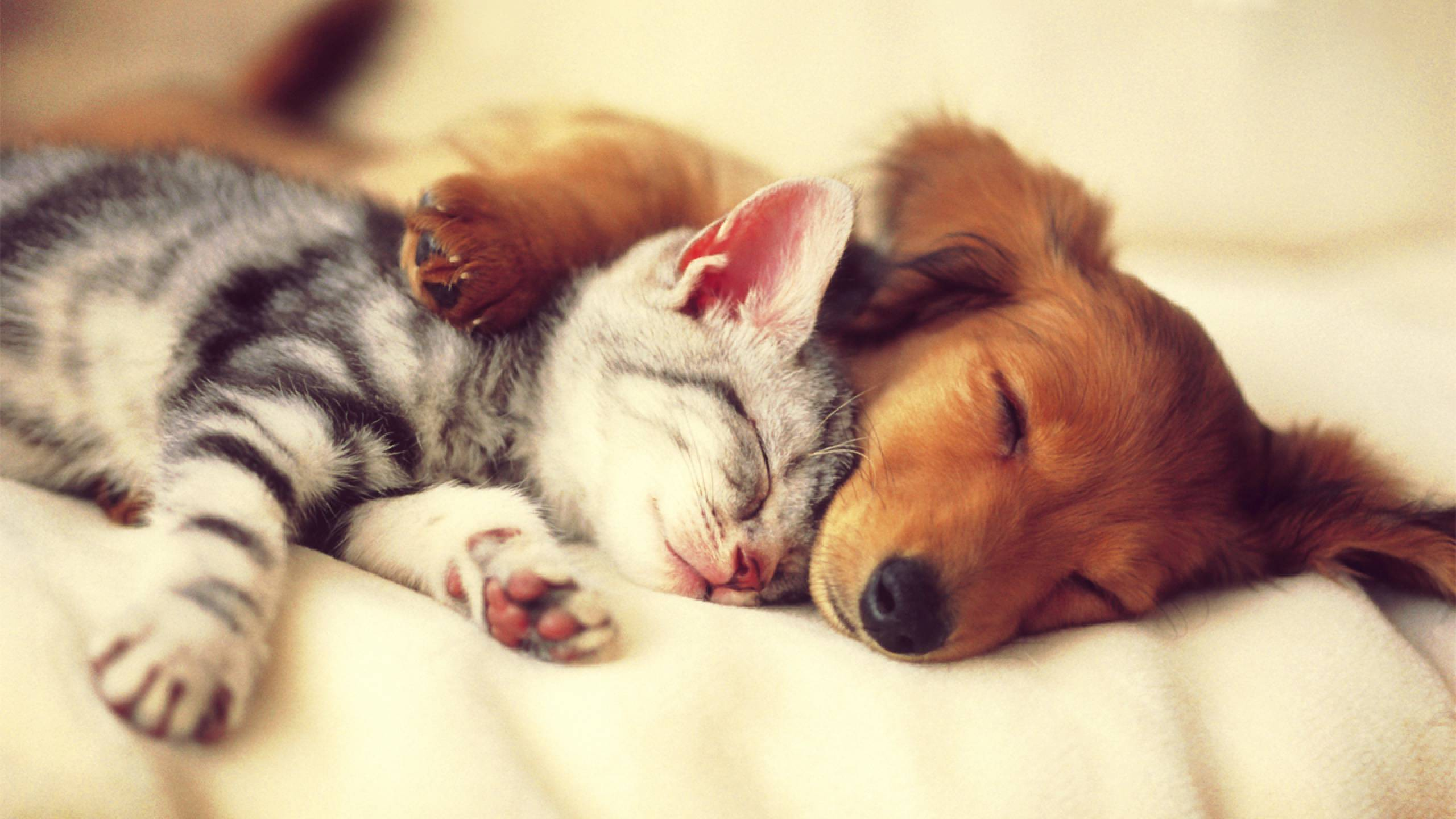 Cat and dog sleeping next to each other, hugged