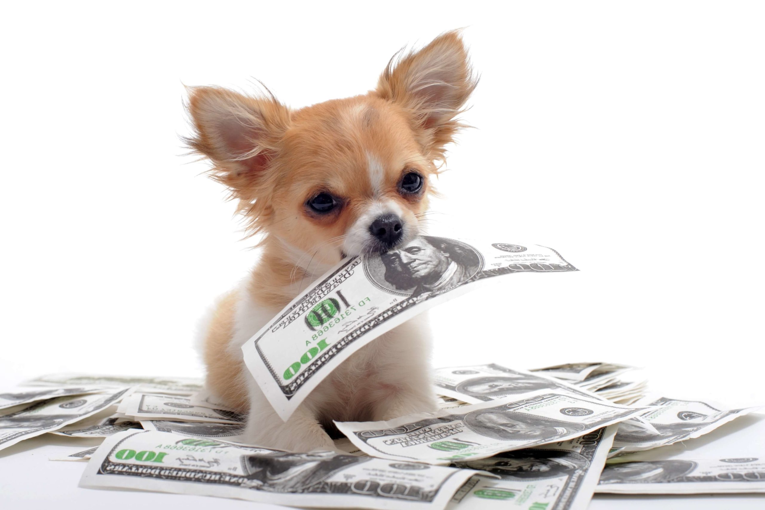 A small pup next to a pile of dollar bills