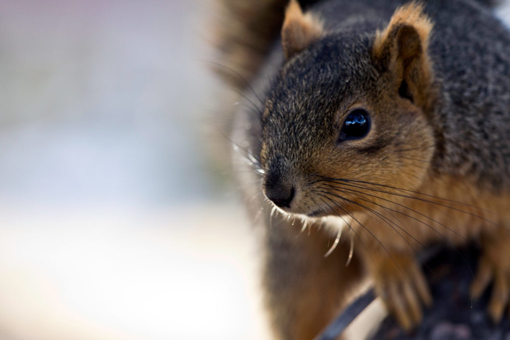 Woman Saves Squirrel, and They Become Travel Buddies
