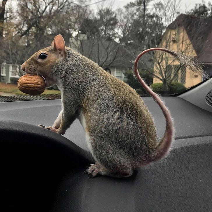 Sweet Pea at Miki's car