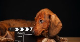 4 Dogs that Made More Money than Human Actors on Hollywood