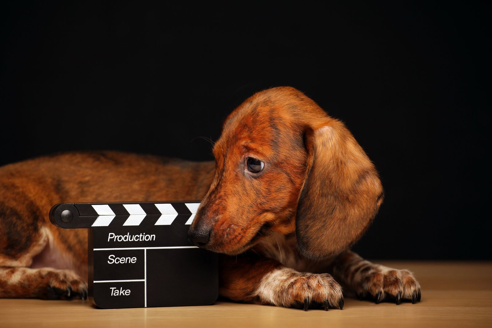 dog laying next to a movie scene cutter