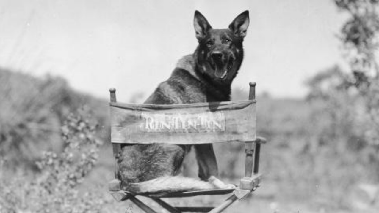 Rin Tin Tin - one of the most known movie dogs