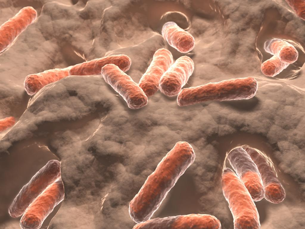 Depiction of gut bacteria living in the intestines