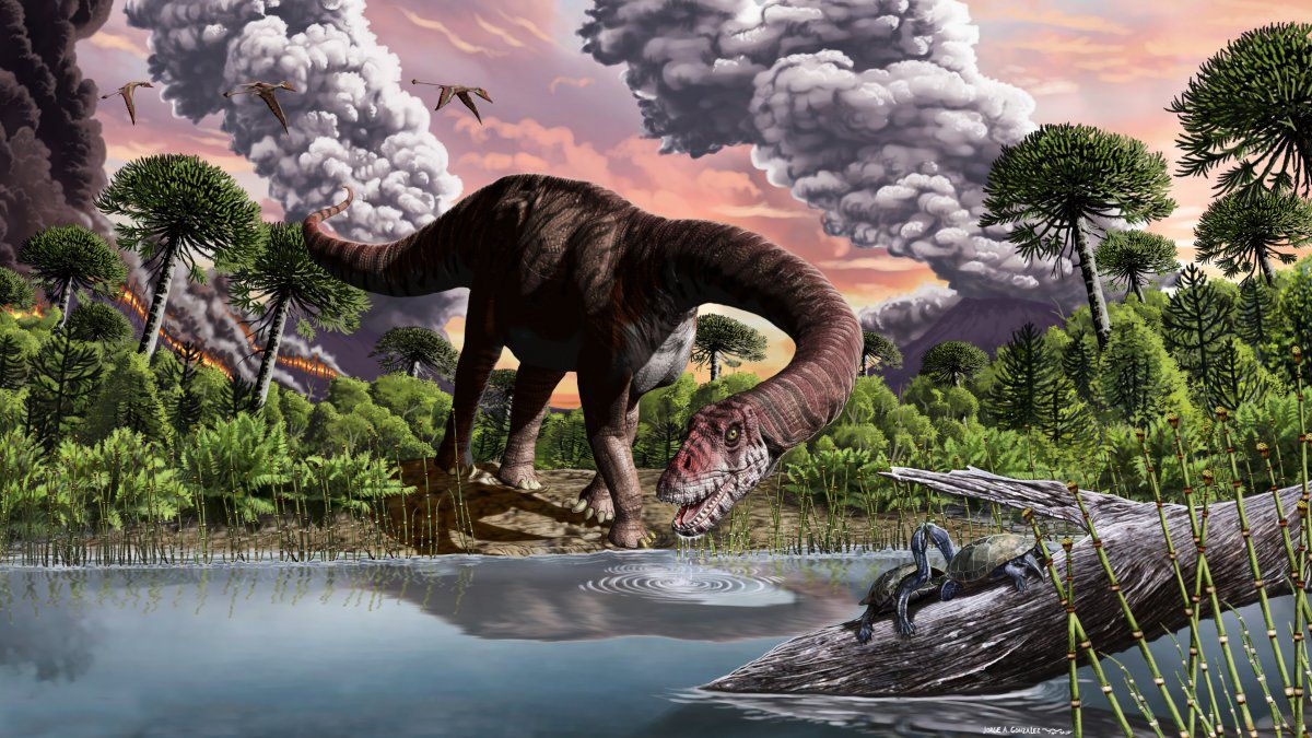 An illustration of the newly discovered Bagualia alba, one of the oldest true sauropod fossils ever discovered, dating to 179 million years ago. B. alba had powerful jaws, long neck, and an oversized gut.
