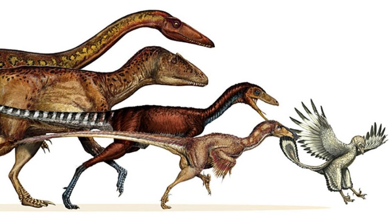 Link between dinosaurs and birds