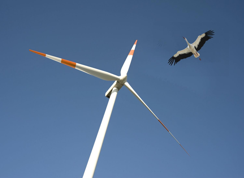 Bird flying next to a wind turbine
