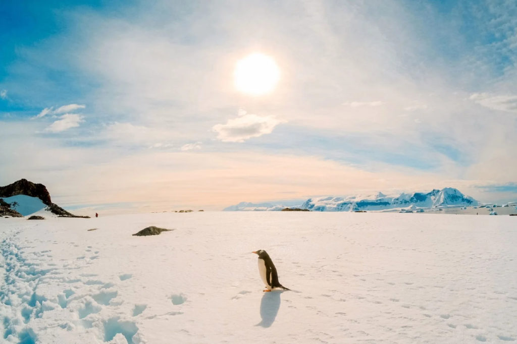 Antarctica Was Most Likely Discovered 1,100 Years Prior to Our Recent Beliefs