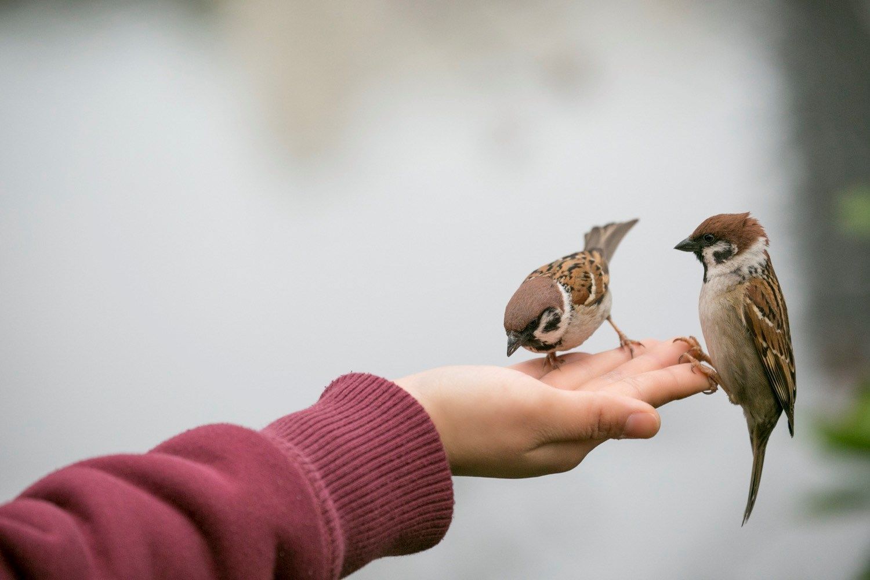 The Dangers of Feeding Wildlife Animals