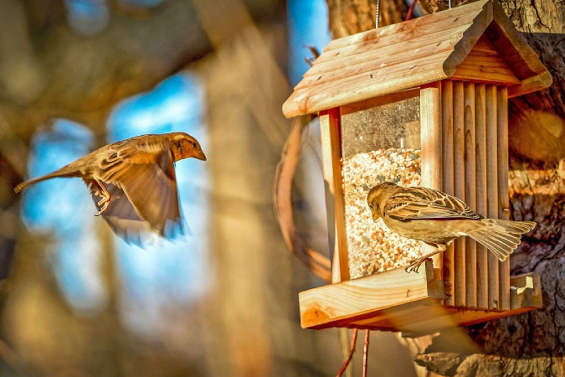 Study Says Birds Won't Become Dependent on People Feeding Them